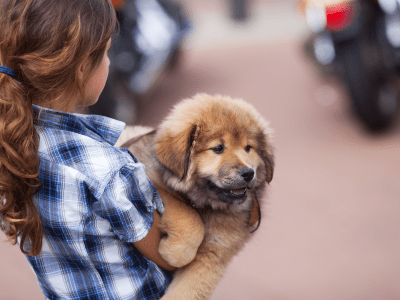 How To Carry A Large Dog