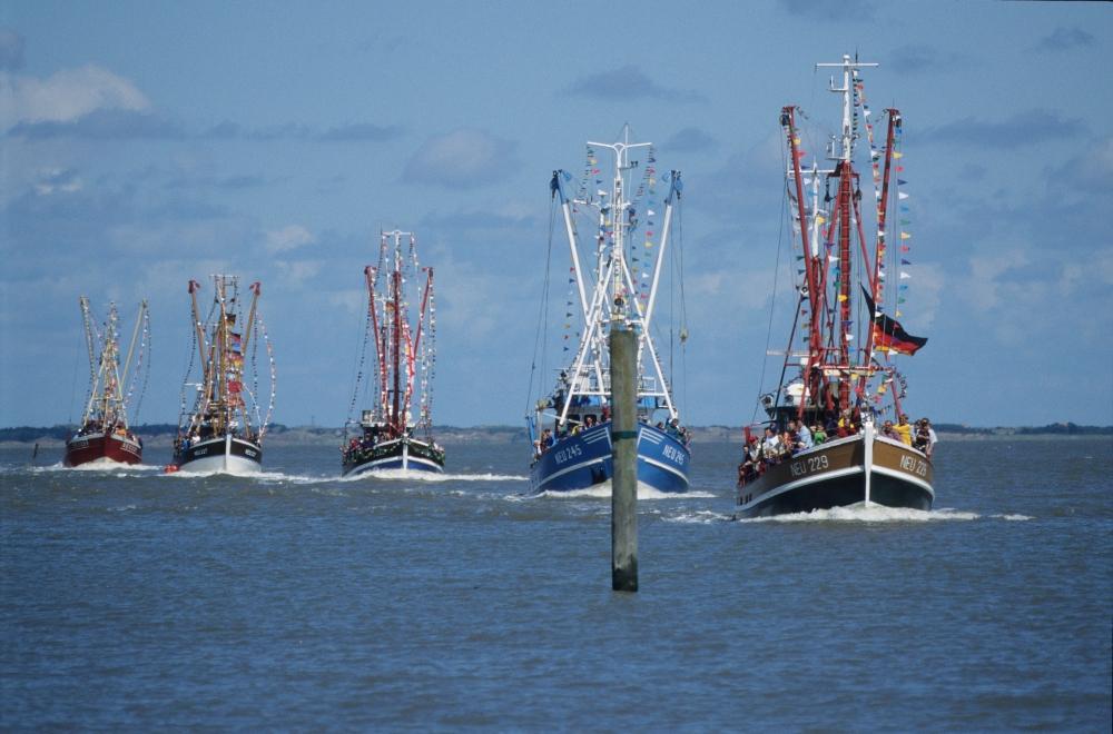 Shrimp cutters in a line.