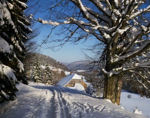 Black Forest in snow