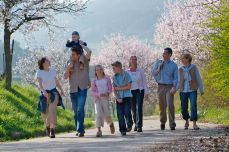 Holidays in Germany: almond trees in bloom on the German Wine Route