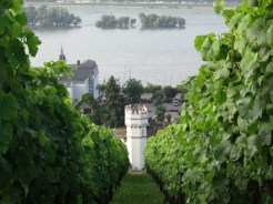 There's always a tower in view along the banks of the Rhine.