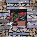 wood pile in Bavaria