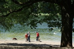 Dog heaven: the Grunewaldsee