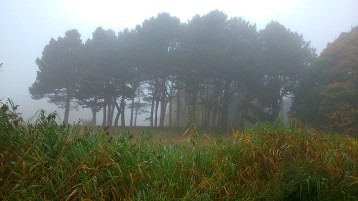 Mist in Sefton Park 3