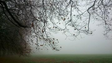 Mist in Sefton Park 6
