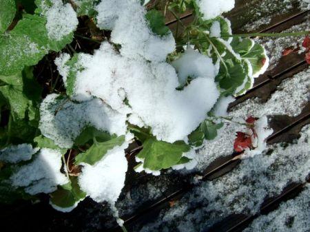 Mississippi snow