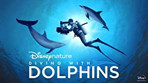 Diving With Dolphins