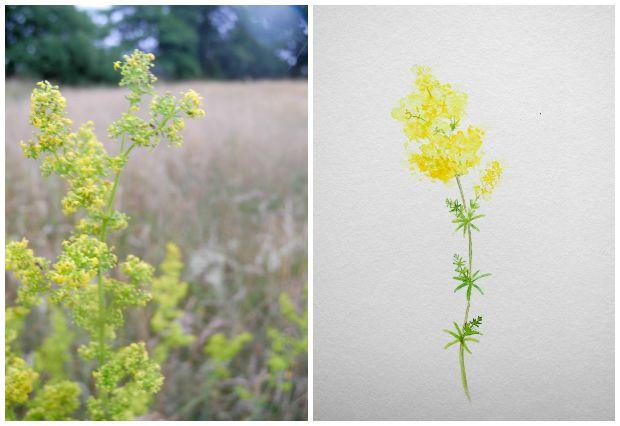 Kräuterbuschen Aquarelle frisch von der Wiese | Gesche Santen Blog
