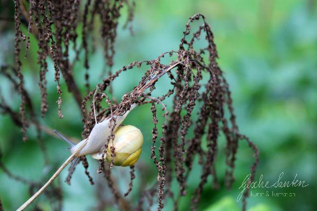 Schnecke im Regen | Gesche Santen
