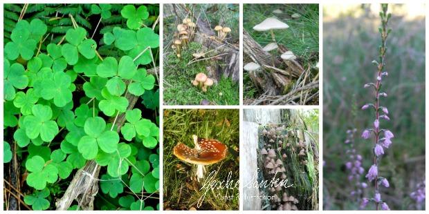 Vom Spaziergang zum Aquarell – Naturerlebnisse kreativ festhalten - Ein Herbsttag im Wald | Gesche Santen Blog