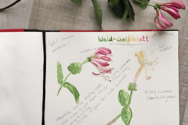 Mein Natur-Skizzenbuch– Wie, Weshalb, Warum?