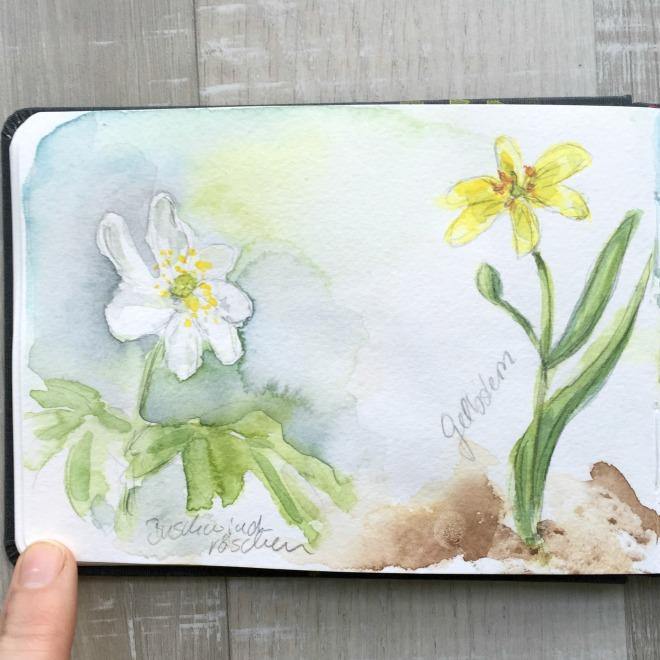 Ein Spaziergang im Frühlingswald – Kleine botanische Entdeckungsreise und Skizzenbuch-Inspiration