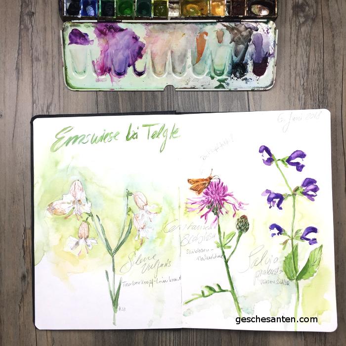 Wildblumen im Skizzenbuch