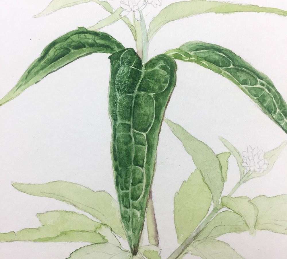 Blätter malen in Aquarell –Techniken und Anwendungsbeispiele, Wasserdost in Aquarell