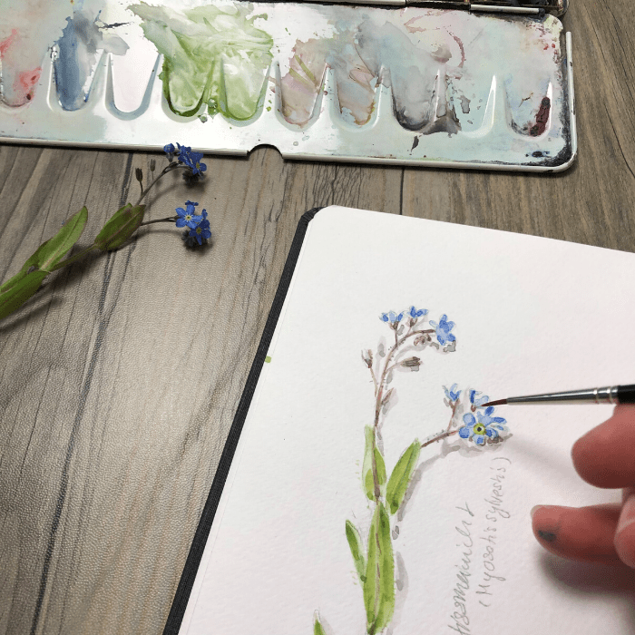 Nature Journal im Frühling: Wald-Vergissmeinnicht in Aquarell {Video}