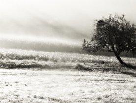 Nebeltag auf dem Land.jpg