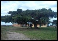 Paisagem Foto 7 Potiguara