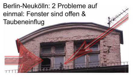 Taubeneinflug in Neukölln
