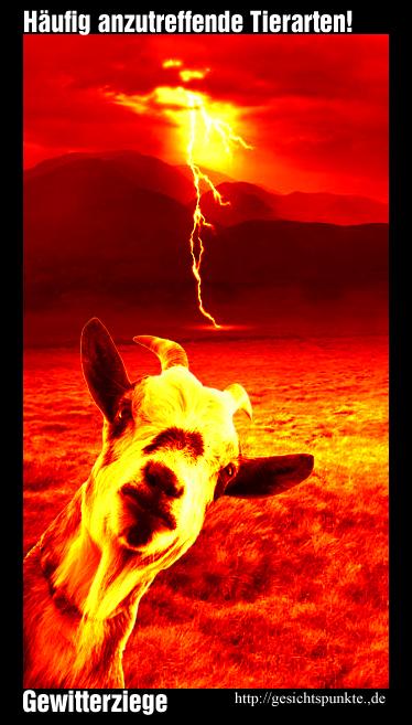 Häufig anzutreffende Tierarten: Gewitterziege