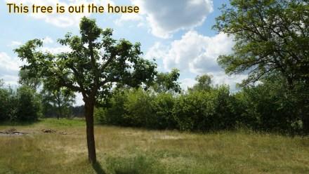 """Kollegenzitat: Man sieht es ihm nicht an, aber auch dieser wunderschöne Baum wird """"verwaltet""""!"""