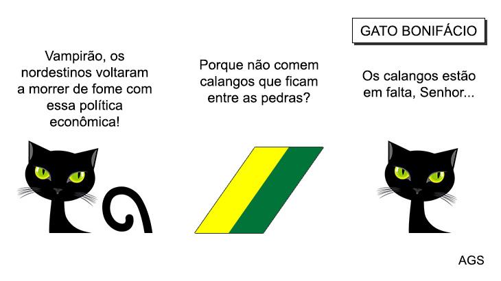 Calangos Gato Bonifácio