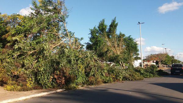 """Conselheiro diz que prefeito promove """"degola"""" de árvores em projeto de iluminação mal elaborado"""