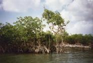 manglares-san-pedro-de-vice-03