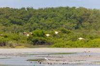 santuario-nacional-los-manglares-de-tumbes-05