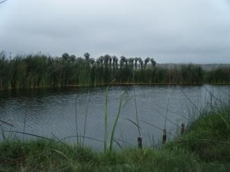 zona-reservada-los-pantanos-de-villa-2