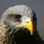 Gestoría Henares águila