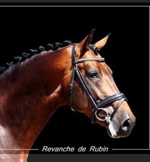 Revanche de Rubin V: Rubin Royal MV: Landadel