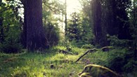 Permalink to Forest Clearing Hd Wallpaper