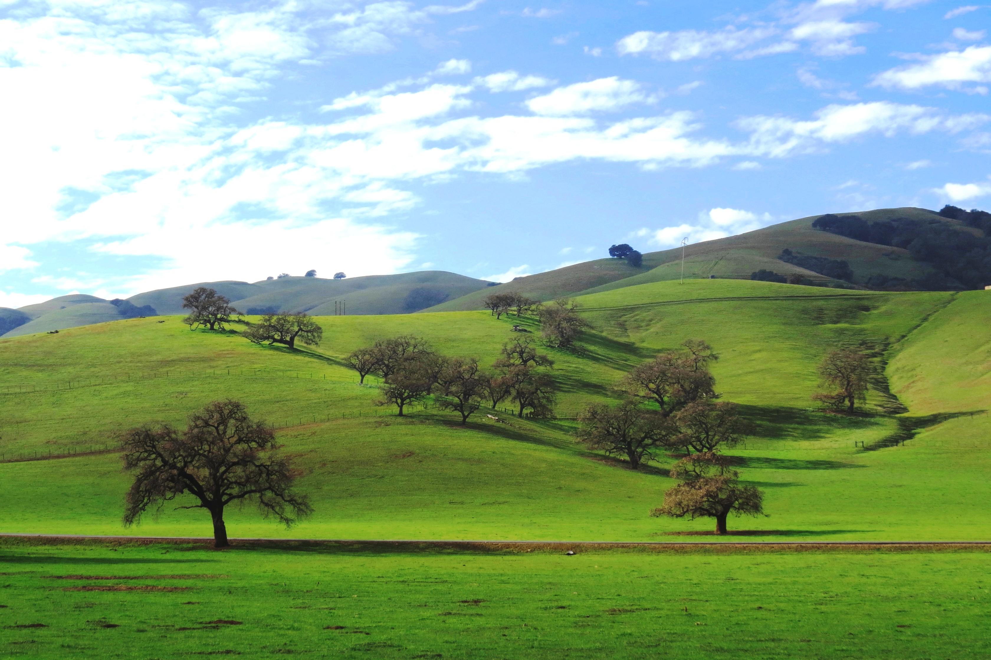 Wallpaper Green Grass Valley Trees Photo Flckr