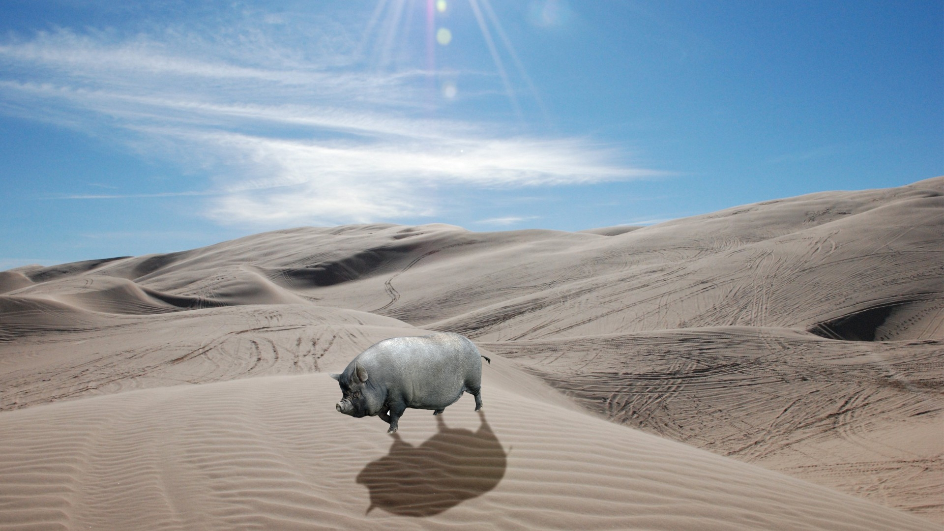 Wallpaper Landscape Animals Pigs Nature Sand Desert