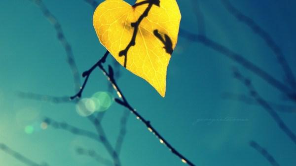 обои : Солнечный лучик, листья, воды, природа, Размышления ...