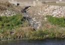Impulsa Getafe denuncia a la alcaldesa por los vertidos ilegales de aguas residuales en Perales del Río