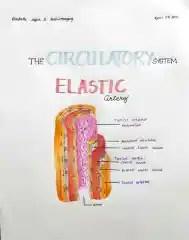 Elastic Artery_1