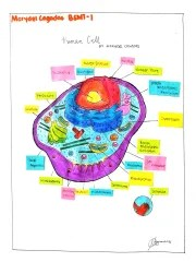 CAGADAS-HUMAN-CELL-DRAWING