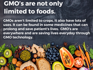 GMO's are not only limited to Foods