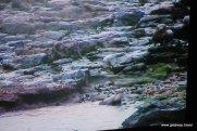 21-Churchill Island Austrlia 10-28-2011 3-21-58 AM