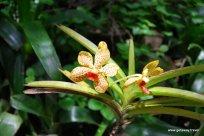 03-Garden of the Sleeping Giant Fiji 2-2-2011 2-55-13 PM