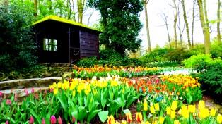 1-Keukenhof gardens-016