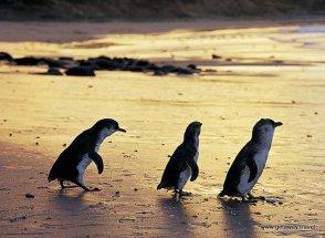 4-Penguin 9