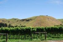 02-Te Awa winery Hawke's Bay 2-7-2011 3-12-40 PM
