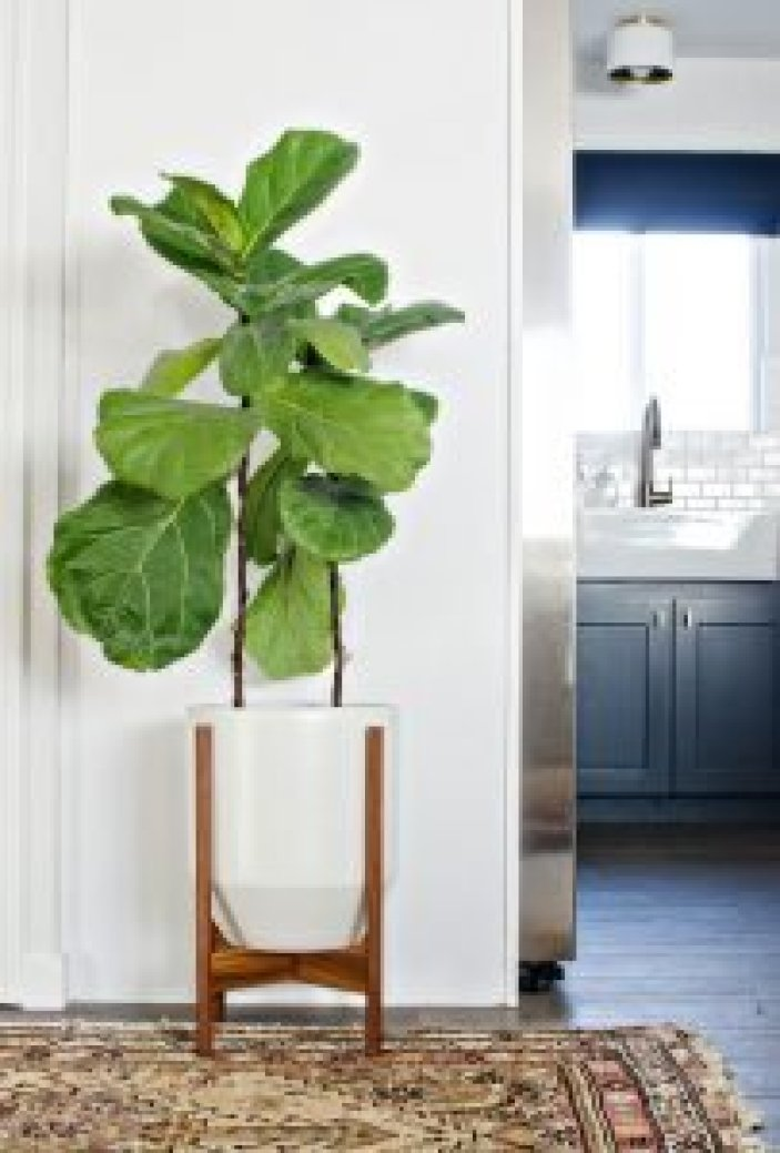 Epic tiered plant stand indoor #diyplantstandideas #plantstandideas #plantstand