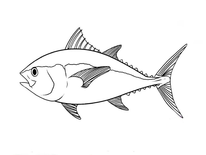 Simple how to draw a basic fish #howtodrawafish