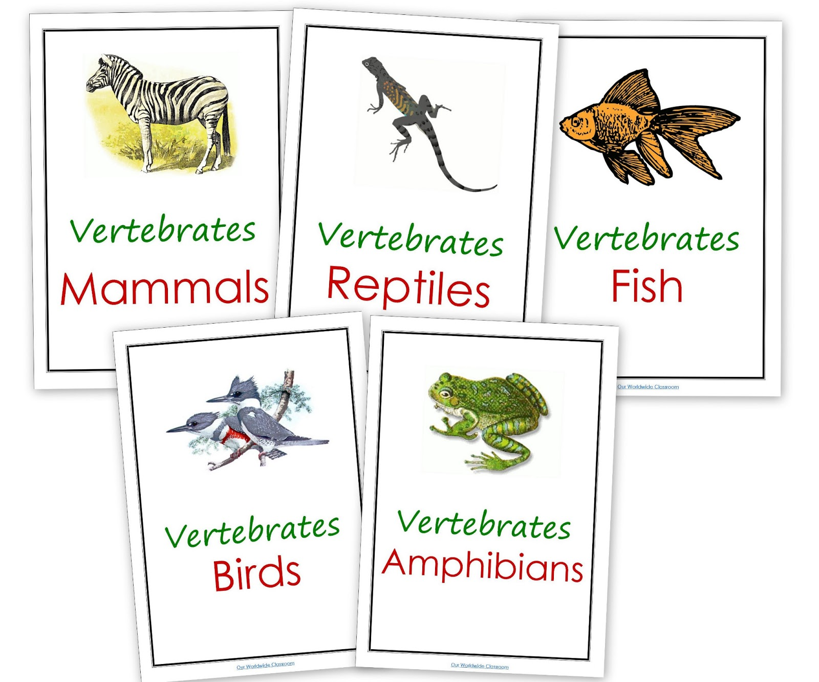 What Are Vertebrates