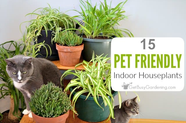 15 Pet Friendly Indoor Houseplants