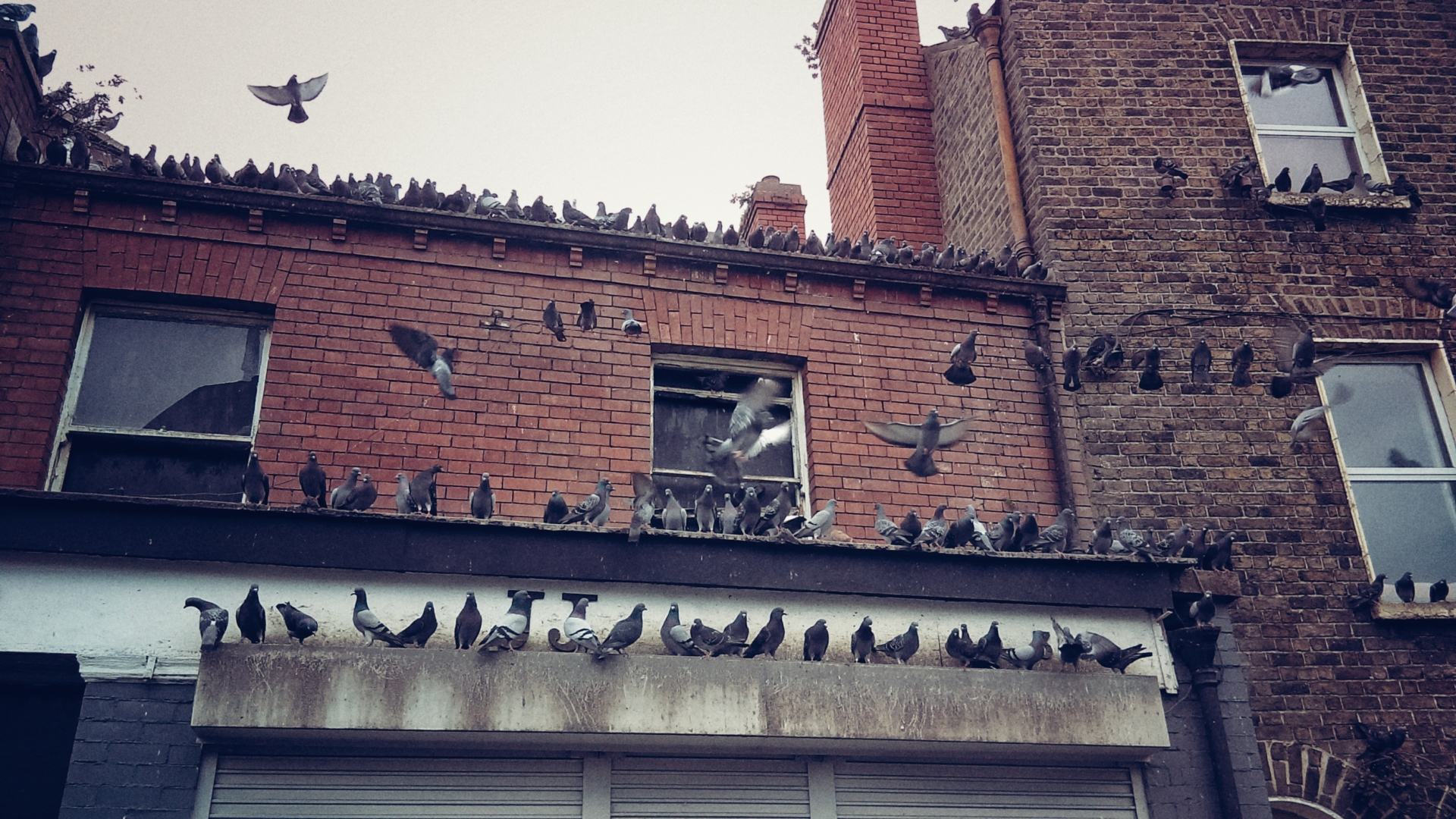 Overrun by Birds