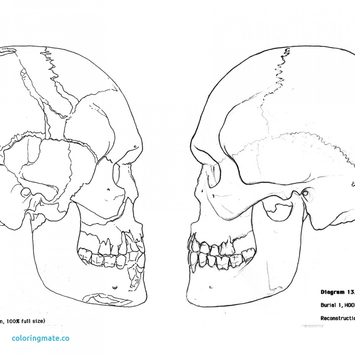 Anatomy And Physiology Coloring Pages At Getcolorings